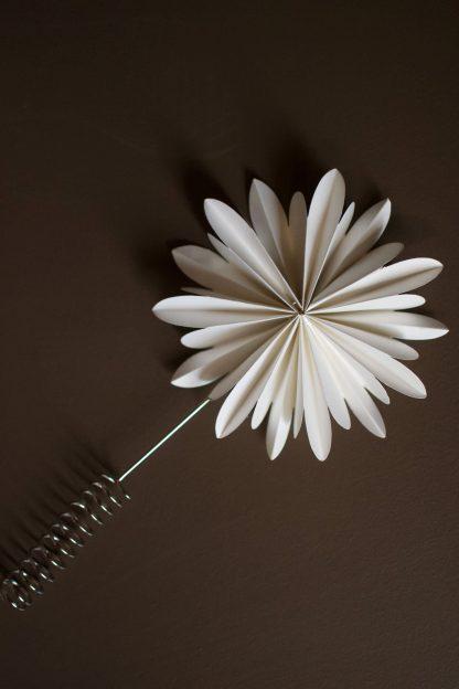 Julgransstjärna - Treetop flower